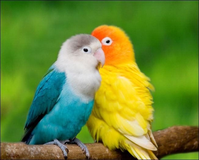 ColorfulParrots
