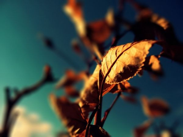 autumn_wallpapers_13
