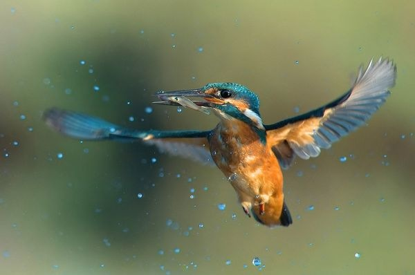 birds_photography_3