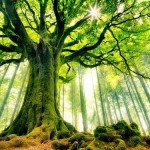 35 Awesome Tree Wallpapers Collection