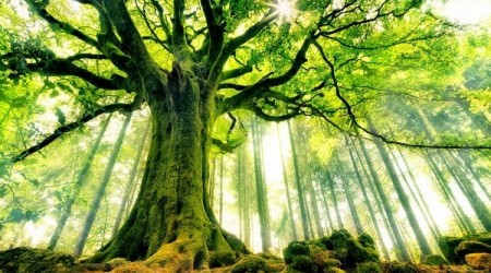 tree_wallpapers_beauty_of_nature_25.jpg