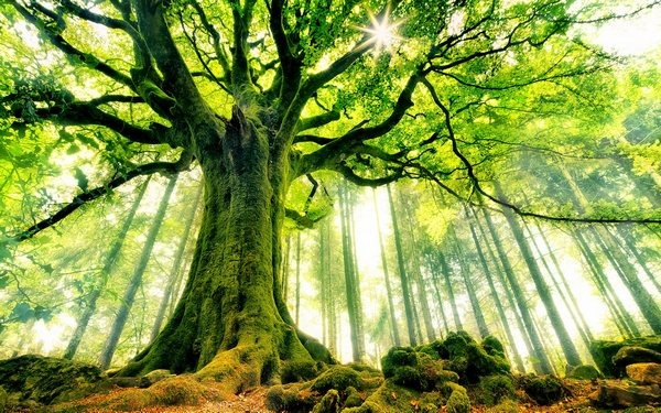 tree_wallpapers_beauty_of_nature_25