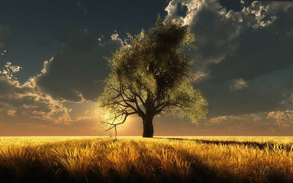 tree_wallpapers_beauty_of_nature_27