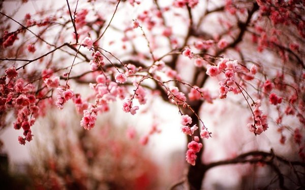 tree_wallpapers_beauty_of_nature_28