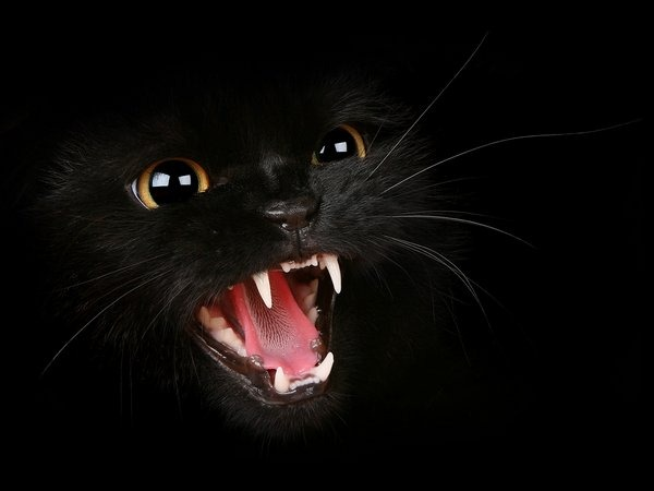 hungry-black-cat-wallpaper